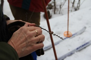 """Susan Olian finds a """"Tamarack rose"""" forming on a pine needle she found on the ground, while snowshoeing through the bog. This is also known as a Tamarack cone that has been shape as a rose."""
